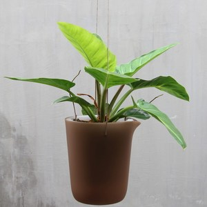 QUALY 綠洲-免澆水圓形花器L(咖啡)
